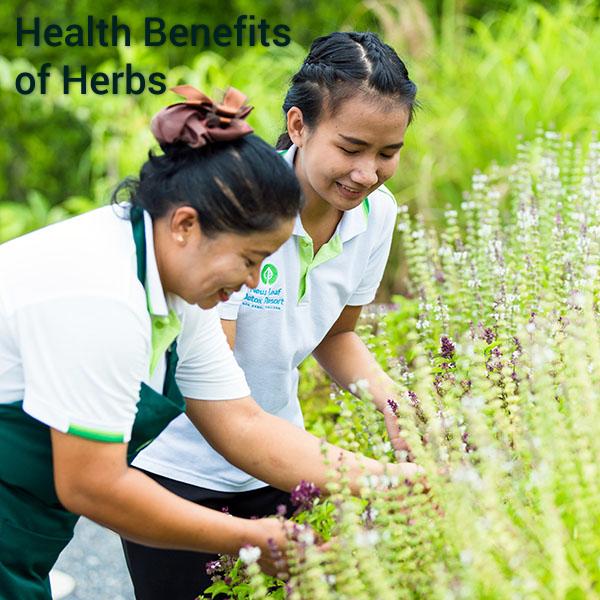 Staff in the herb garden