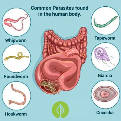 Common human parasite types