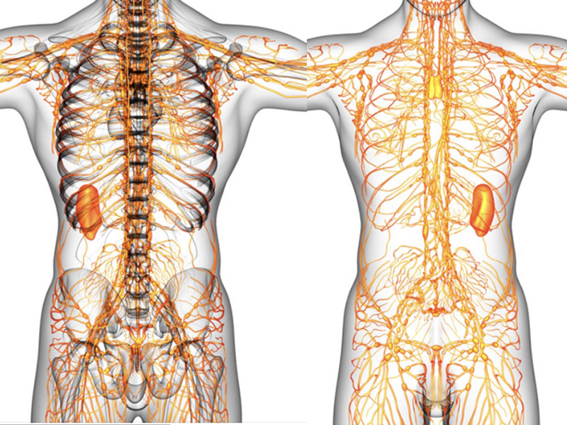 Two Lymph Systems